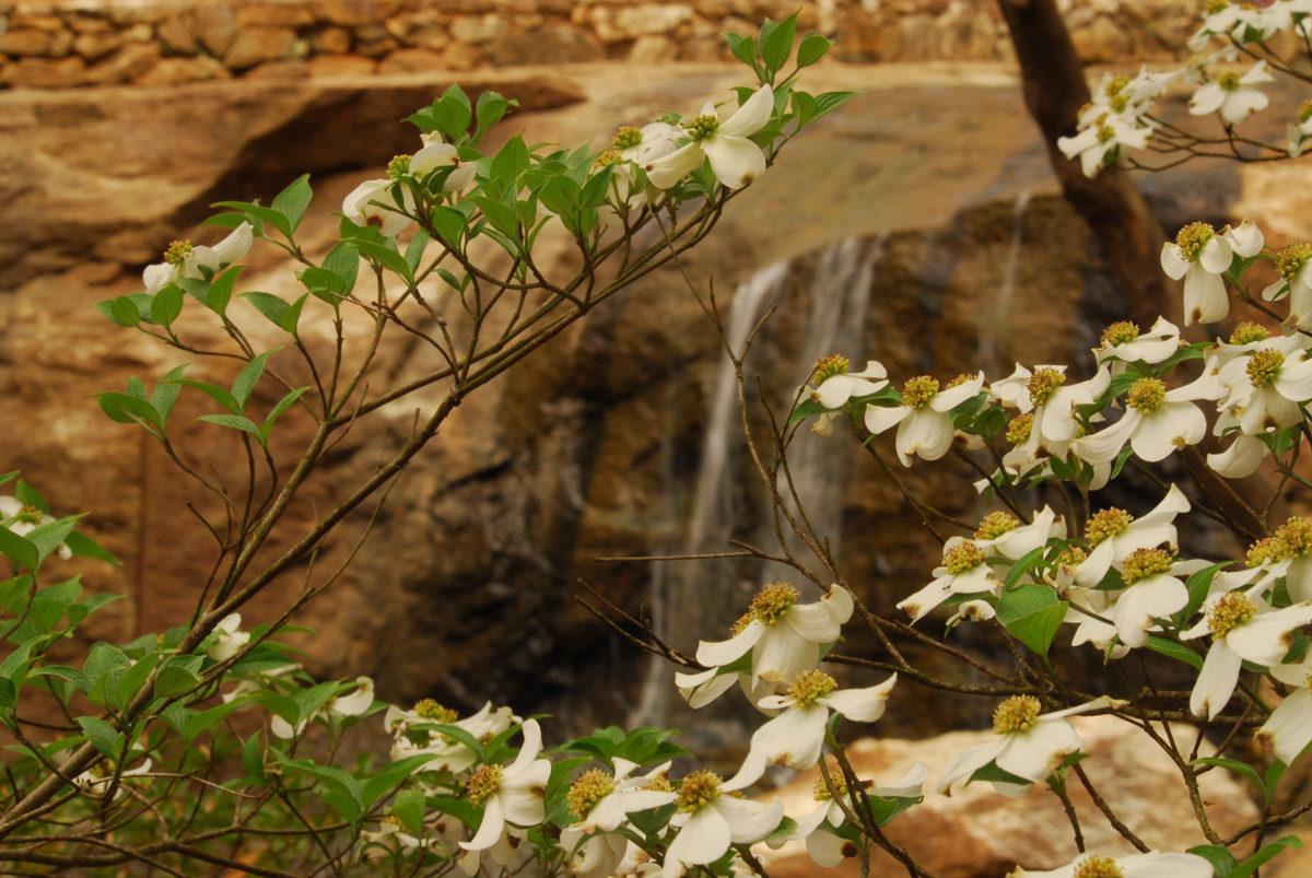 SC - GREENVILLE - Rock Quarry Garden - Light Journeys