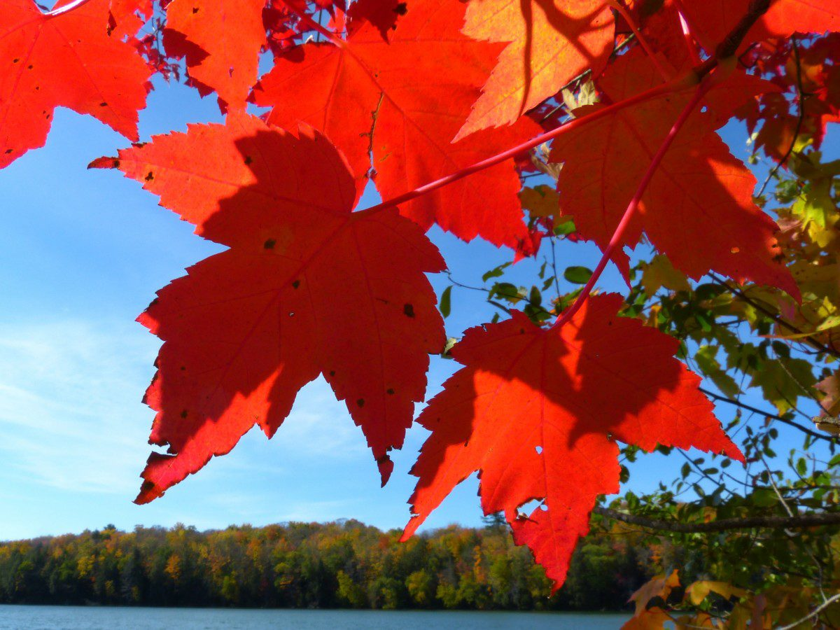 Fall color, Pete's Lake  -  Hiawatha National Forest, Michigan