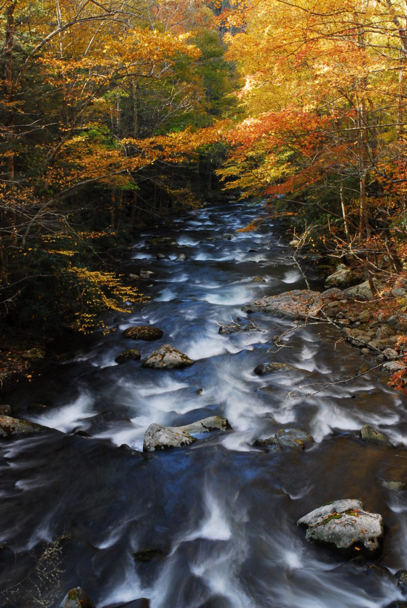 Looking downstream along the Middle Prong in autumn  -  Tremont Section  -  Great Smoky Mountains National Park, Tennessee
