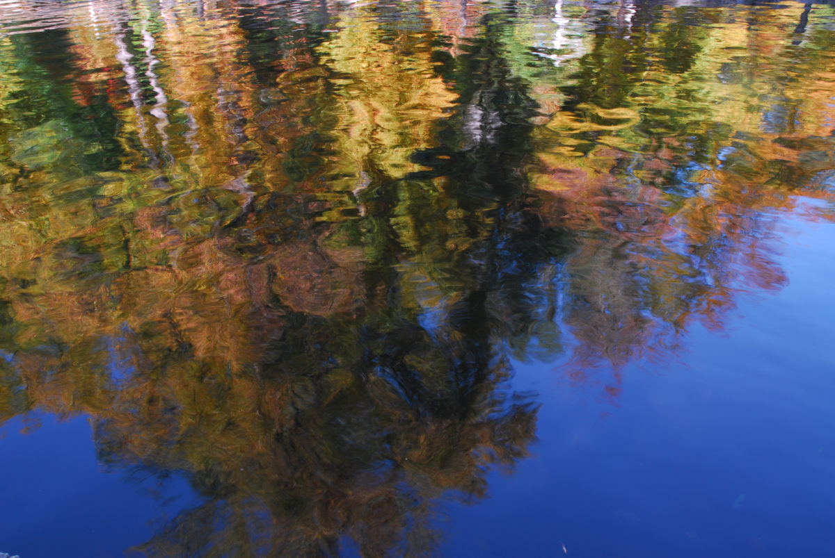 Fall colors reflected in trout pond  -  Jones Gap State Park, South Carolina