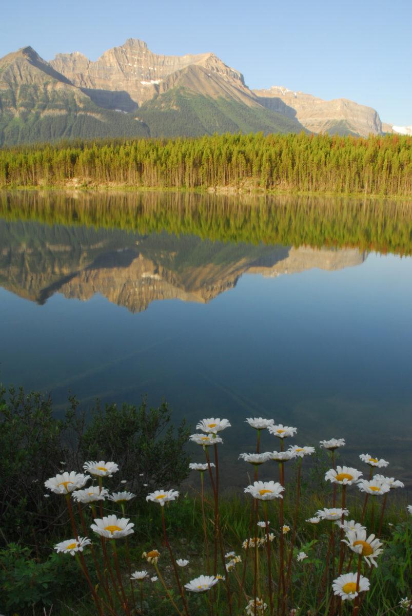 Herbert Lake  -  Banff National Park, Alberta