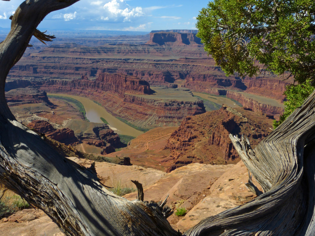 View of the Colorado River  -  Dead Horse Point State Park, Utah