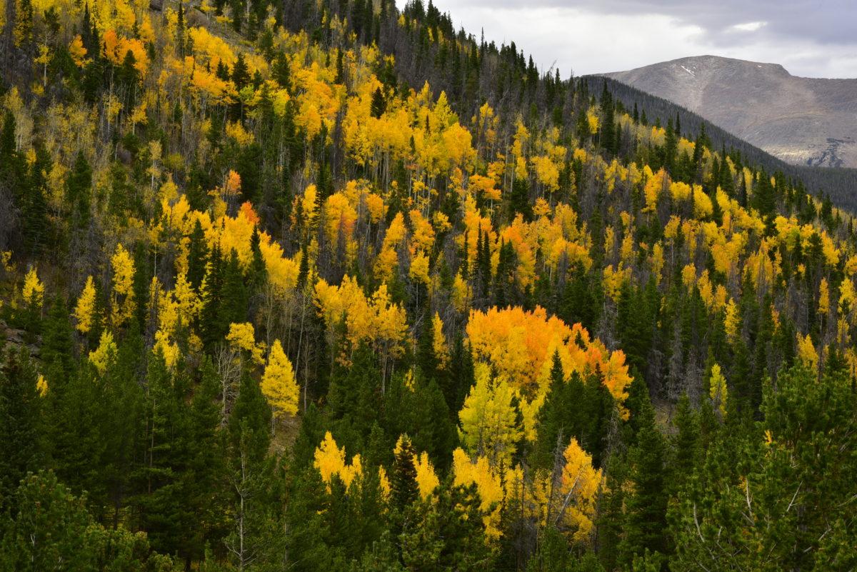 Fall colors on a ridge  -  Hidden Valley area  -  Trail Ridge Road  -  Rocky Mountain National Park, Colorado