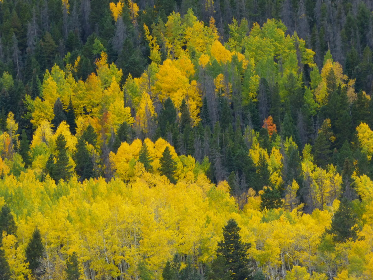 Fall color  -  Horseshoe Park  -  Rocky Mountain National Park, Colorado