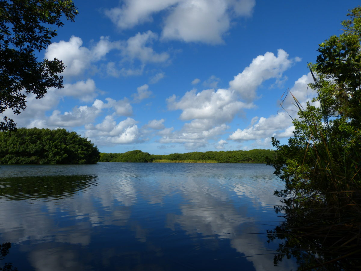 Paurotis Pond Reflection  -  Everglades National Park, Florida