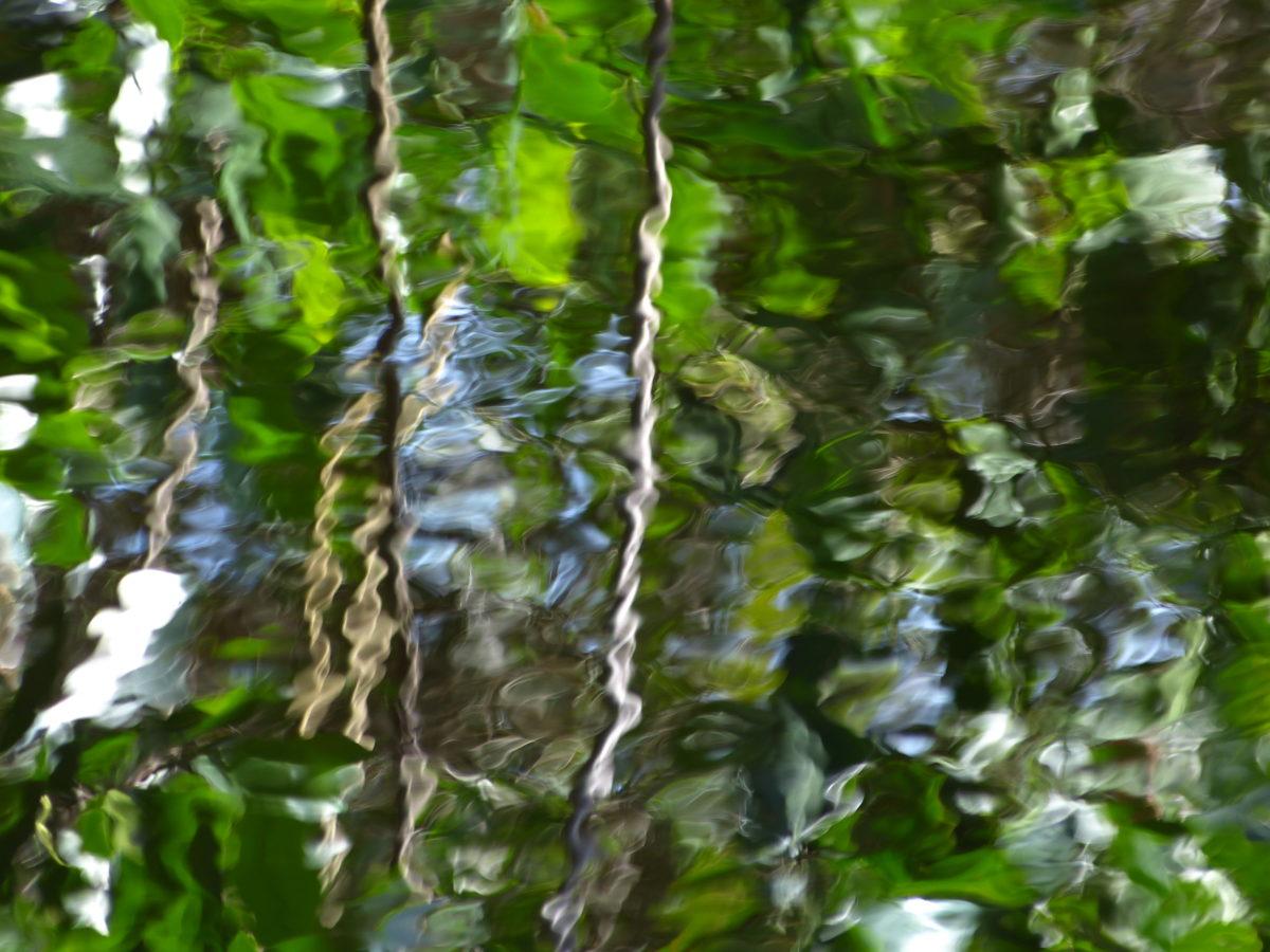 Abstract Reflection  -  Flamingo Area  -  Everglades National Park, Florida