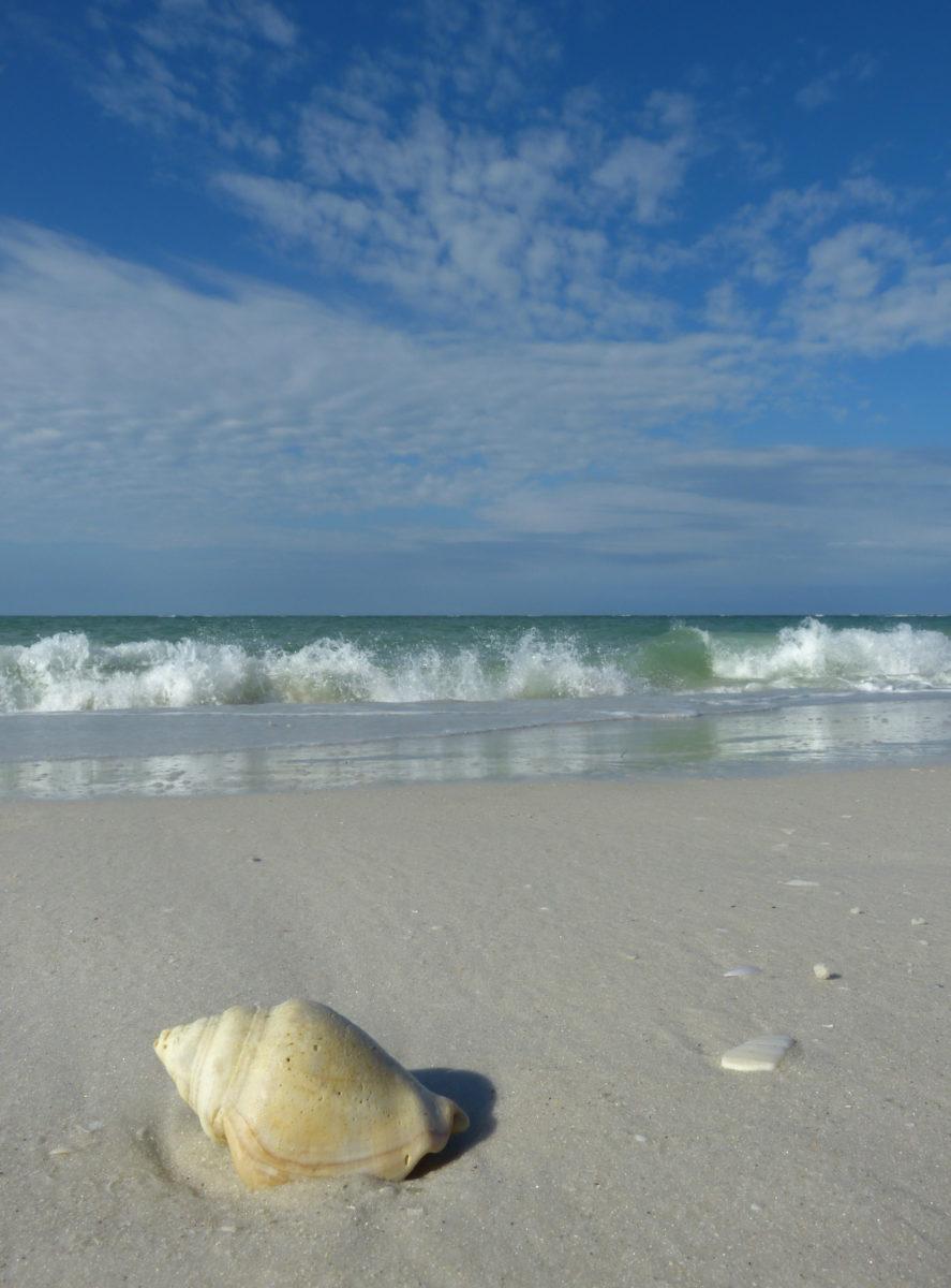 Shell, Surf, and Sky  -  North Lido Beach  -  Sarasota County, Florida