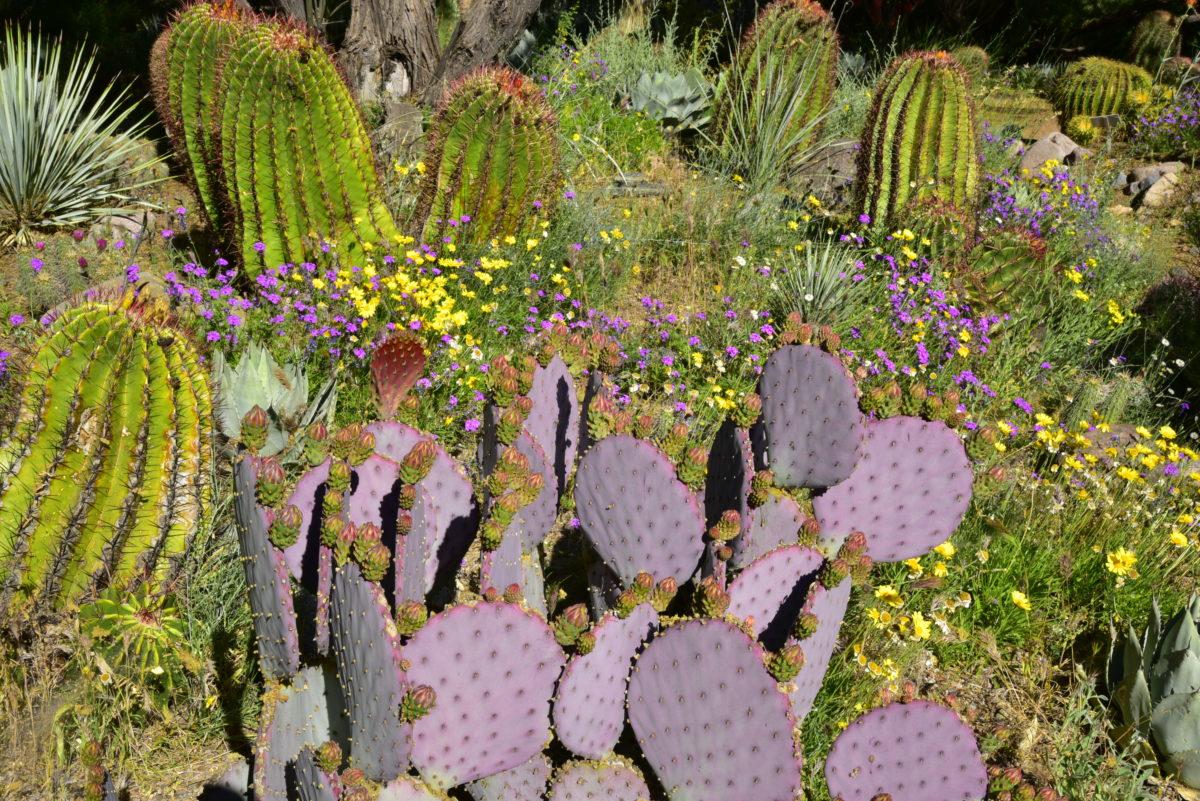 Demonstration Garden  -  Boyce Thompson Arboretum State Park, Arizona