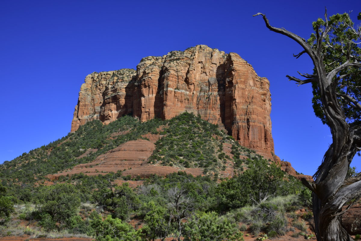 Courthouse Butte framed by a Juniper  -  Courthouse Butte Vista Trail  -  Red Rock Country  -  Coconino National Forest, Arizona