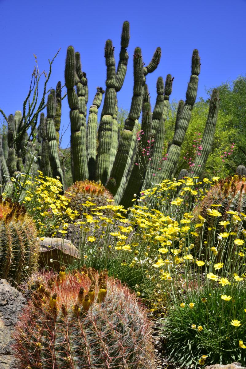 View of Cactus Garden  -  Arizona-Sonora Desert Museum, Arizona