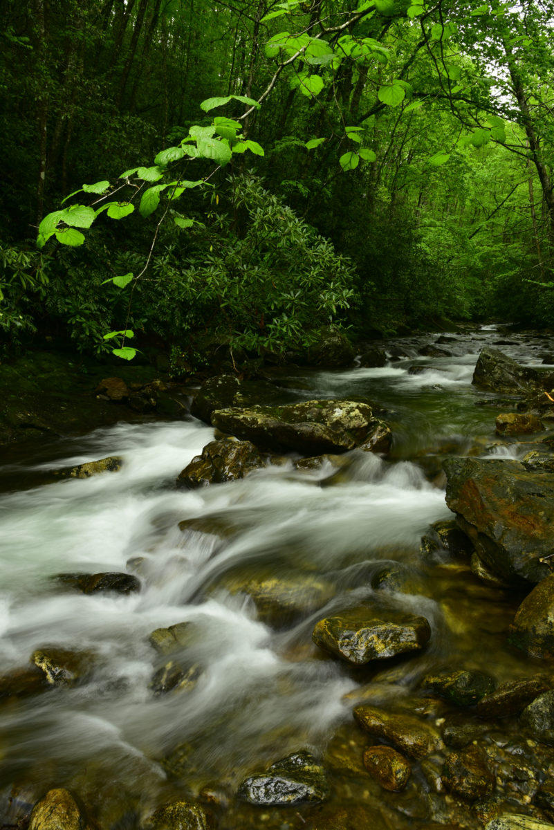 Cascades on Courthouse Creek  -  Pisgah National Forest, North Carolina