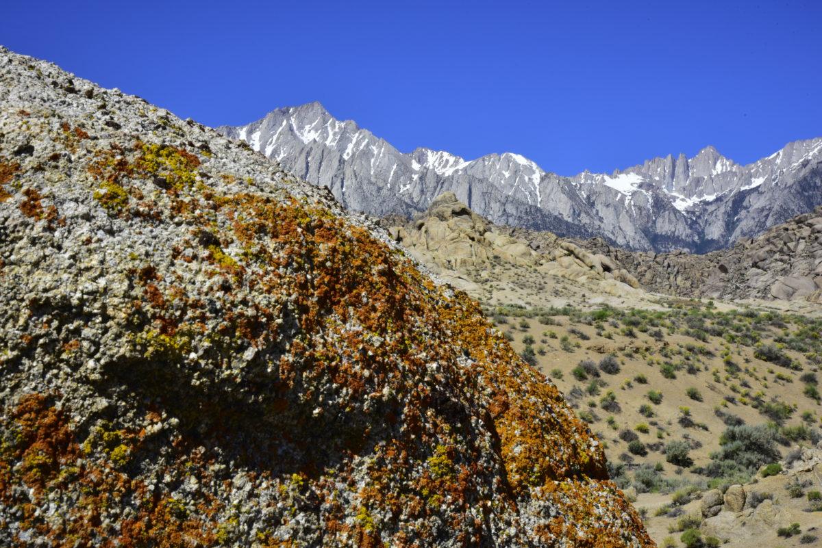 Lichen on granite, Eastern Sierra Nevada  -  Arch Loop Trail  -  Alabama Hills Recreation Area, California