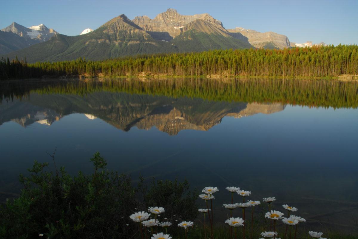 Reflection in Herbert Lake  -  Banff National Park, Alberta